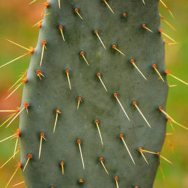 Cactus A Thorny Situation by Gaby Ethington