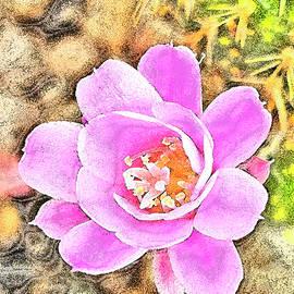 Cactus Flower. REBUTIA by Andy i Za