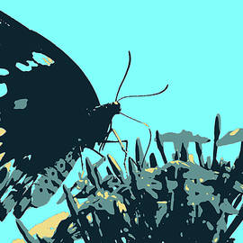 Cairns Birdwing butterfly Blue BG by Nicholas Christiansen
