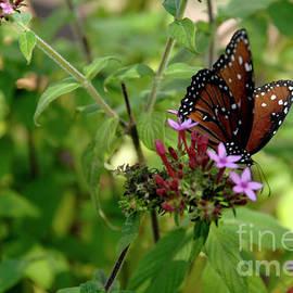 California Butterfly by Julieanne Case