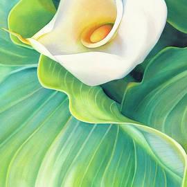 California Calla Lily by Sandy Haight