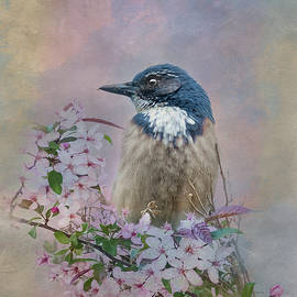 California Scrub Jay - Painterly by Patti Deters