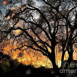 California Sunsets by Leslie Hunziker