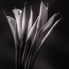 Calla Lily 008 by Mike Penney