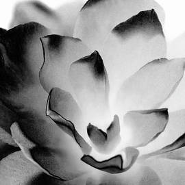 Camellia in Black and White 1 by Eileen Brabender