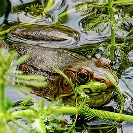 Camouflaged  by Kathi Isserman