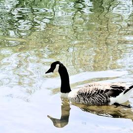 Canada Goose 22 by Lynne Iddon
