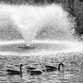 Canada Goose Fountain by Mary Mikawoz