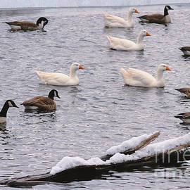 Canadian Goose Pond by Diann Fisher