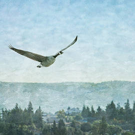 Canadian Goose Above Salmon Arm by Mary Lee Dereske
