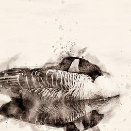 Canadian Goose  by Darren Wilkes