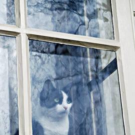 Candid Cat in the Window by Marilyn DeBlock