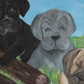 Cane Corso Puppies by Christy Saunders Church
