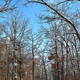 Canopy of Snow LadenTrees by Ann Brown