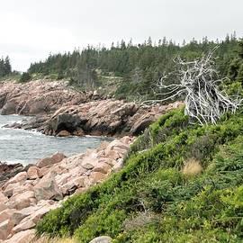 Cape Breton Coast by Rose Wark