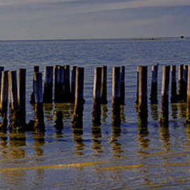 Cape Charles Pilings by Norma Brandsberg