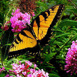 Captivating Butterfly by Gardening Perfection