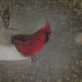 Cardinal Art by Scott Olsen