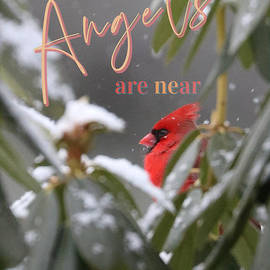 Cardinals Appear When Angels Are Near by Diann Fisher