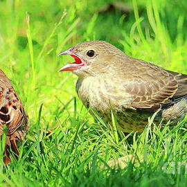 Caring Sparrow by Atiqur Rahman