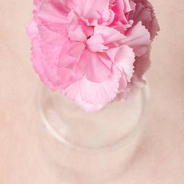 Carnation by Monica Fraulini