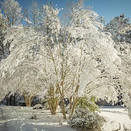 Carpe Myrtles in winter by Jim Brown