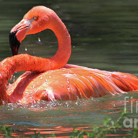 CarribeanFlamingo-8100 by Gary Gingrich Galleries