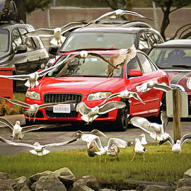Cars and Gulls by Brian Tada