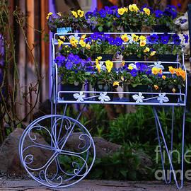 Cart of Pansies by Debbie Lind