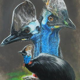 Cassowary by Barbara Keith