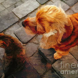 Cat and dog together by Birgitta Astrand