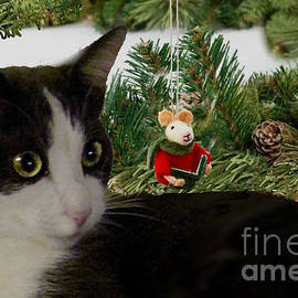 Cat and Mouse by Janette Boyd