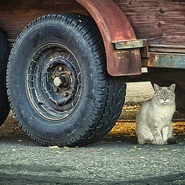 Cat and Trailer by Mick Anderson