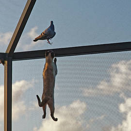 Cat Climbing to Pigeon by Sally Weigand