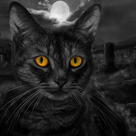 Cat composite with Selective Coloring by TJ Baccari