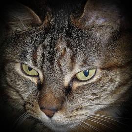 Cat by Eleanor Bortnick