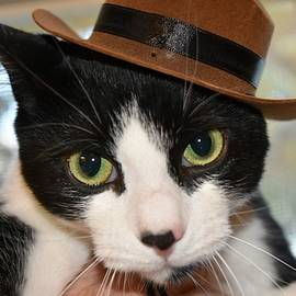 Cat In A Hat by Donna Meyer