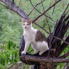 Cat in a Tree by Andrew Wilson