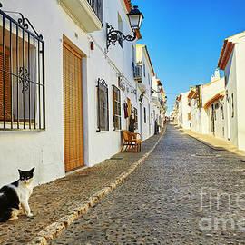 Cat In Altea by Facto Foto
