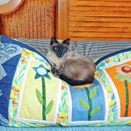 Cat on Soft Pillow by Sally Weigand
