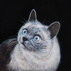 Cat Portrait Painting by Asp Arts