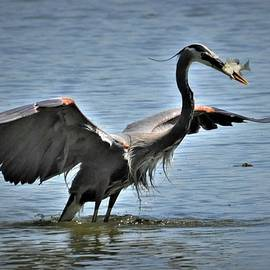 Catching Dinner by Kathy Ricca