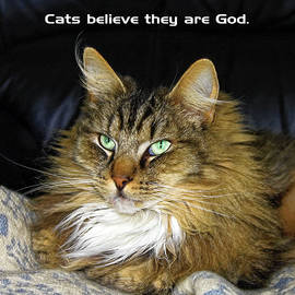 Cats Believe They're God by Sally Weigand