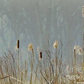 Cattails In The Winter Mist by Tami Quigley