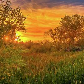 Cattails Sunset by Lorraine Baum