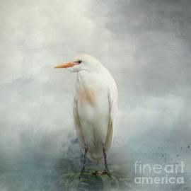 Cattle Egret by Eva Lechner