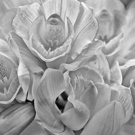 Cymbidium Orchid Bunch Black and White by Gaby Ethington