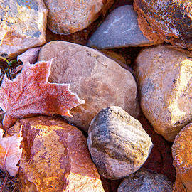 Caught by the Rocks by Susan Crossman Buscho