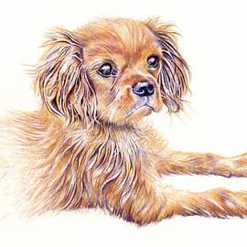 Cavalier King Charles Dog  by Debra Hall