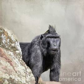 Celebes Crested Macaque by Eva Lechner